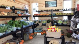 Fresh seasonal produce at Sarges Farmstand in Forks, Wa